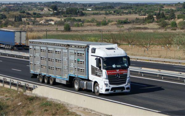 Mavitrade - trasporto animali vivi